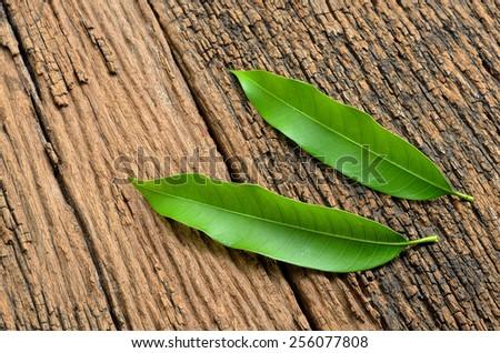 mango leaves on wood background - stock photo