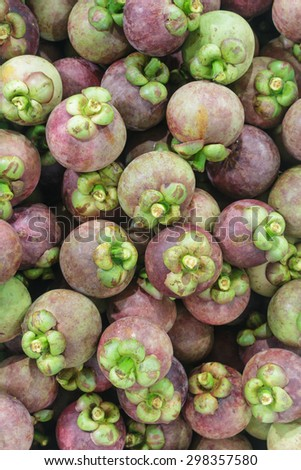 mangosteen. mangosteen.stage at garden before sending to fruit market.