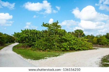 Mangros park - stock photo