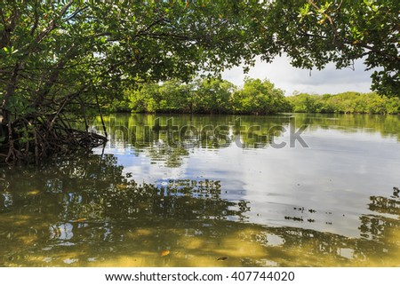 Mangrove arch over the river, Oleta State Park, Florida - stock photo
