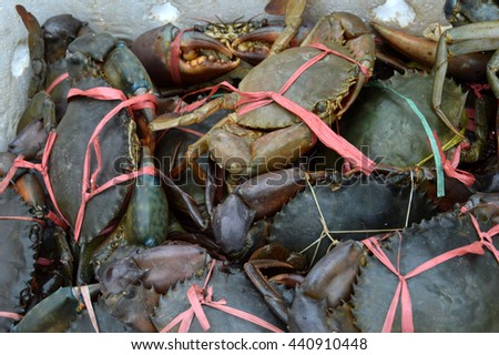 mangrove crabs tied in the box - stock photo