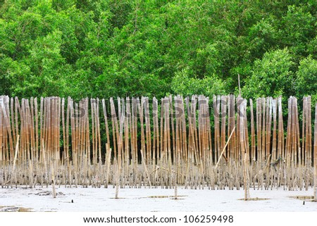 Mangrove Forest. - stock photo