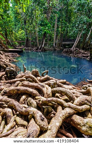 Mangrove forest and emerald river in Krabi, Southern of Thailand.