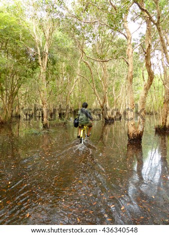 Mangrove forest and man ride bicycle