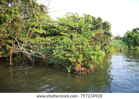 mangrove forest and river