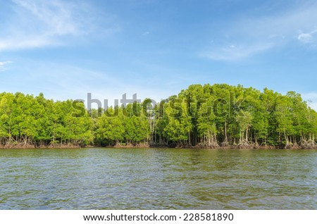 Mangrove forest and river at chanthaburi thailand - stock photo