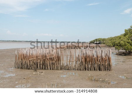 Mangrove forest at gulf of Thailand