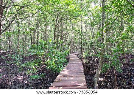 mangrove forest at ko samui Thailand.