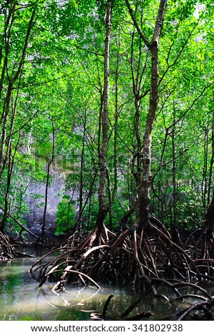 Mangrove Forest at Langkawi GeoPark, UNESCO listed of the rain forest with the mangrove trees Ecological System, Malaysia - stock photo
