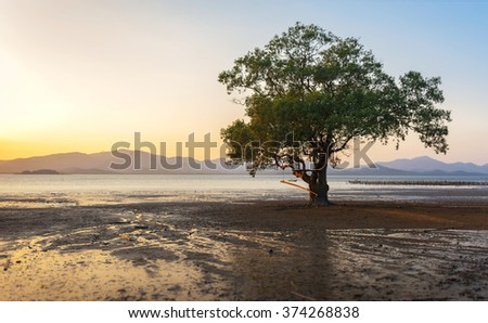 Mangrove forest at sunset time - stock photo