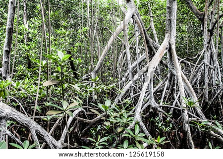 Mangrove forest in Colombia ( HDR image ) - stock photo