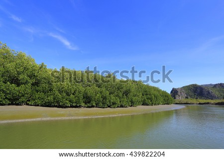 Mangrove forest in South East Asia