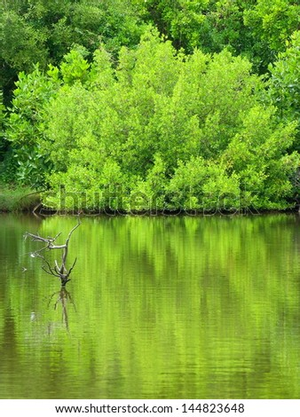 mangrove forest in Thailand - stock photo