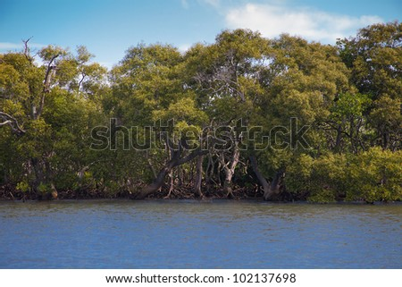 Mangrove forest in the ocean water, near Gold Coast, Queensland, Australia - stock photo