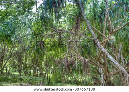 mangrove forest in the South of Sri Lanka in the Indian Ocean - stock photo