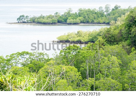 Mangrove forest of Sabah Malaysian Borneo from high vantage point. - stock photo
