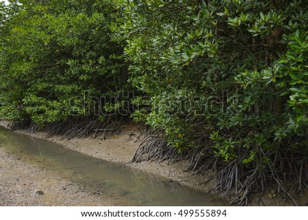Mangrove forest on a river at Thailand