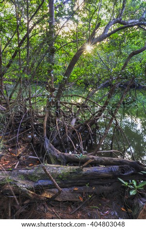 Mangrove forest surronding Oleta River, Oleta River State Park, Florida - stock photo