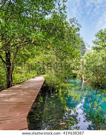 Mangrove forest with wood walk way and emerald river, Krabi, Thailand.
