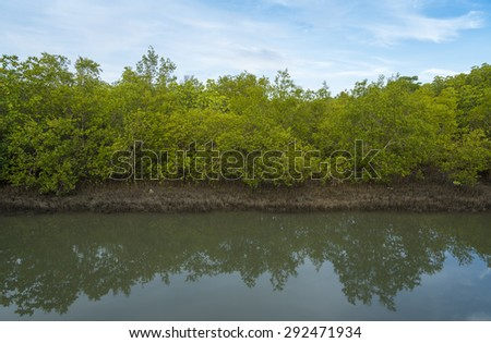 Mangrove forests and Forest reflecting on water - stock photo