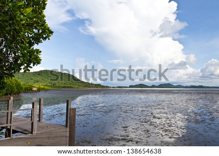 Mangrove forests in Thailand. - stock photo