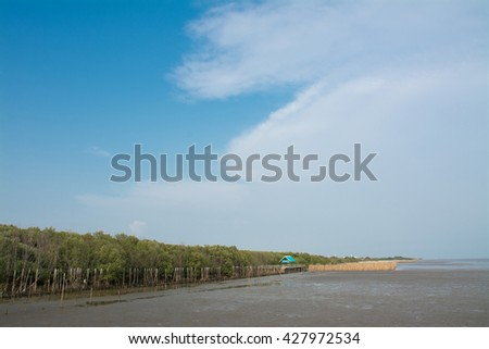 Mangrove forests in Thailand with blue sky