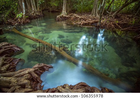 Mangrove forests with Pond - stock photo