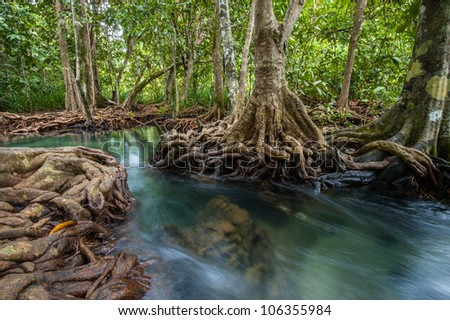 Mangrove forests with river and green tree - stock photo