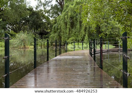 mangrove forests with wooden bridge