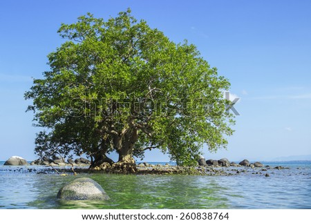 Mangrove in area of low tide and high tide. Southeast Asia - stock photo