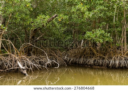 Mangrove in Celestun, Mexico - stock photo
