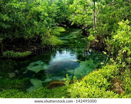 mangrove in tropical forest : Thailand - stock photo
