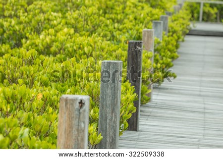 Mangrove or mangrove is a plant growing on the subtidal and highest tide. Coastal Estuary or bay - stock photo
