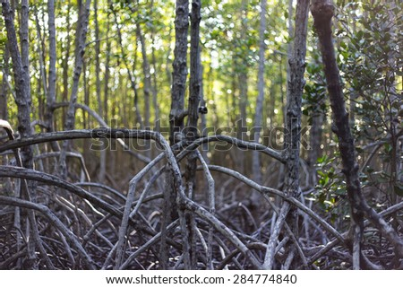 mangrove Pranburi, Prachuap Khiri Khan province, Thailand - stock photo