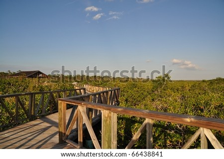 Mangrove river at south of grand bahama island, bahamas - stock photo