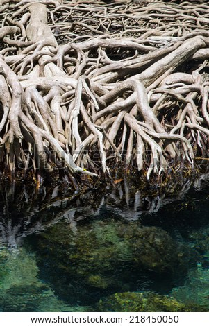 Mangrove root in emerald sea - stock photo