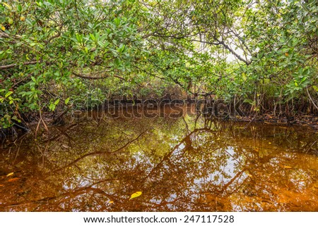 Mangrove swamp in the Everglades National Park, Florida - stock photo