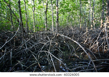mangrove ,thailand - stock photo