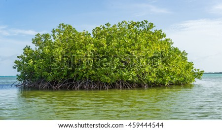 Mangrove tour - Views around the Caribbean Island of Bonaire in the ABC Islands