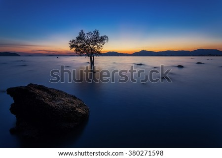 Mangrove tree with a colorful sunset during low tide at Mor Mu Dong area in Phuket Thailand - stock photo