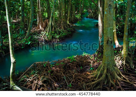 Mangrove trees along the turquoise green water. - stock photo