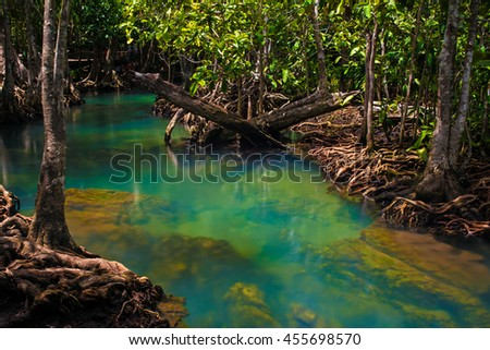 Mangrove trees along the turquoise green water.