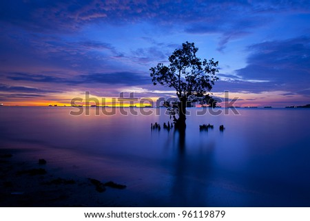 Mangrove trees and landscape sunset scene at Nirvana Beach, Padang, Sumatera Island, Indonesia. Taken on long exposure.