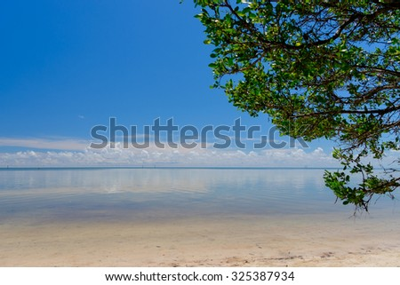 Mangrove trees growing along the sandy shoreline and shallow clear waters of the Florida Keys - stock photo