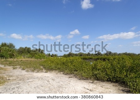 Mangrove trees growing in Florida Everglades