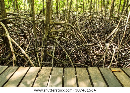 Mangrove trees natural tropical forests in Thailand. - stock photo