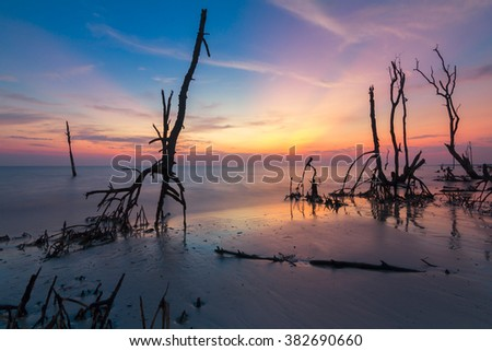 Mangrove trees on the beach at sunset/sunrise