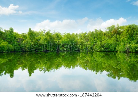 Mangroves and blue sky                                     - stock photo
