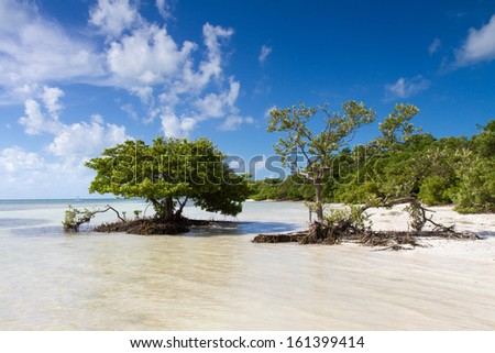 Mangroves at a beach in the Florida Keys, United States - stock photo