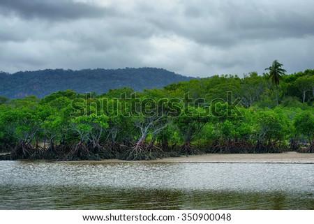 mangroves, coastal scenery North Queensland, Australia - stock photo